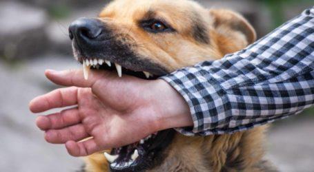 Στο Νοσοκομείο Βόλου 57χρονος μετά από δάγκωμα σκύλου