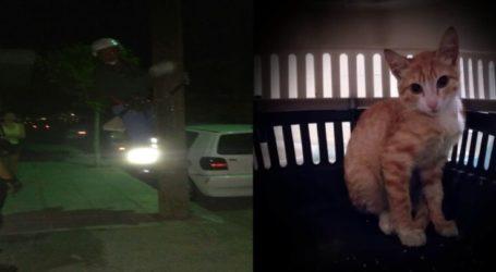 Ειδικός εναερίτης με αυτοθυσία διέσωσε γατάκι τα ξημερώματα στη Λάρισα (φωτο)