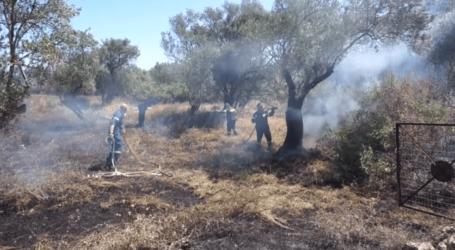 ΤΩΡΑ: Φωτιά σε περιοχή της Αγριάς