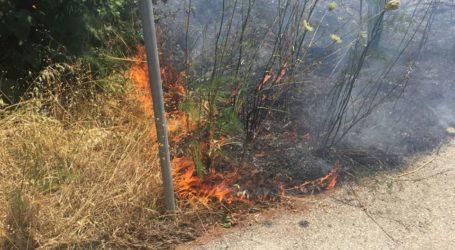 Βόλος: Μικρή πυρκαγιά στον Περιφερειακό δρόμο