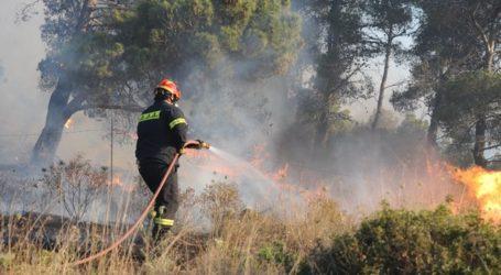 ΤΩΡΑ: Φωτιά στις Μικροθήβες – Επιχειρούν τρία οχήματα της Πυροσβεστικής