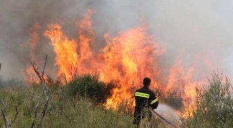 Φωτιά στο Κατηχώρι Πηλίου