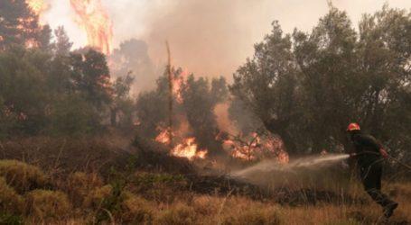 Λάρισα: Φωτιά στη Χάλκη