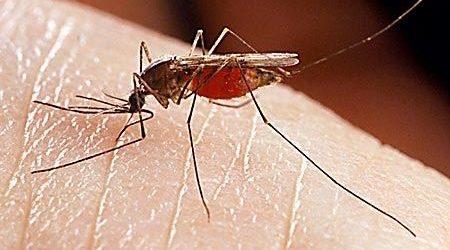 Το πρόγραμμα κουνουποκτονίας στη Μαγνησία