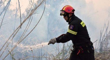 Πυρκαγιά κοντά στη Συκέα της Ελασσόνας – Σε εξέλιξη επιχείρηση της Πυροσβεστικής
