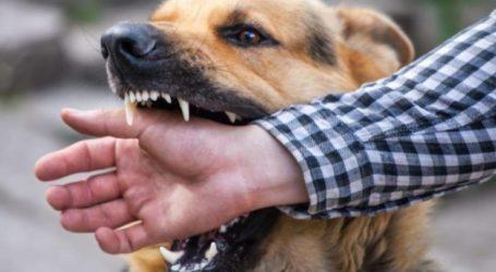 Παιδί δέχτηκε επίθεση από σκύλο στον Τύρναβο – Ο Λαρισαίος πατέρας του είχε κάνει επανειλημμένως συστάσεις στον ιδιοκτήτη για την επιθετικότητα του ζώου