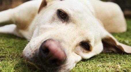 Απορρίφθηκαν τα ασφαλιστικά μέτρα Λαρισαίου κατά γείτονα για το… γαύγισμα του σκύλου του