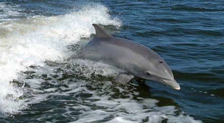Σκιάθος: Δελφίνια έπαιζαν δίπλα σε λουόμενους – Δείτε το βίντεο
