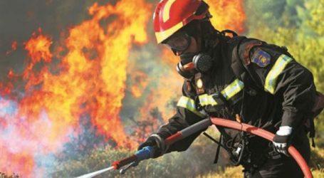 Βόλος: Νέα φωτιά στα Πευκάκια