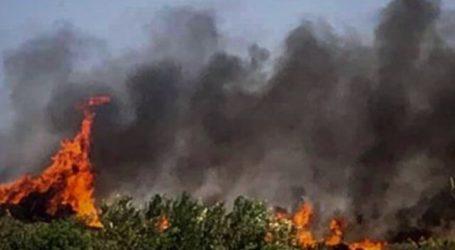 Πυρκαγιά σε δάσος της Αίγινας