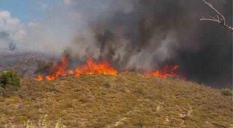 Φωτιά σε δάσος του Αργοστολίου της Κεφαλονιάς