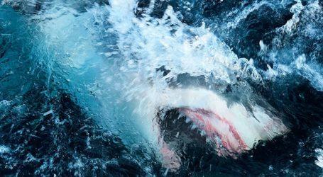 Άνδρας έσωσε τη γυναίκα του ρίχνοντας γροθιά σε καρχαρία