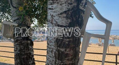 Λουόμενοι κλειδώνουν τις καρέκλες τους στους κορμούς των δέντρων