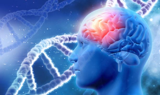 Alzheimers genes 666x399 1