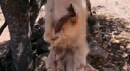 Φρικιαστικό έγκλημα στα Χανιά: Έγδαραν και κρέμασαν σκυλιά