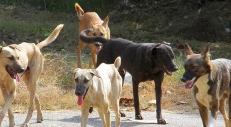 Βόλος: Αγέλη σκύλων επιτέθηκε σε γυναίκα – Πως περιγράφει τον εφιάλτη που έζησε
