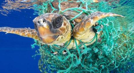 Καρέ – καρέ η διάσωση θαλάσσιας χελώνας στο λιμάνι του Βόλου – Δείτε το συγκινητικό βίντεο