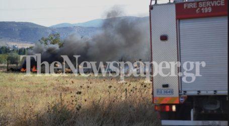 Μεγάλη φωτιά στη Ν. Ιωνία Βόλου – Δείτε εικόνες και βίντεο