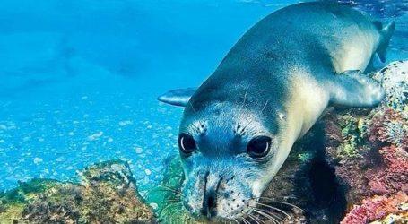 «Όχι» στο εισιτήριο εισόδου στο θαλάσσιο πάρκο λέει ο Δήμος Σκοπέλου
