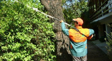 Ξεκινά κλάδεμα στα δέντρα της πόλης η Αντιδημαρχία Πρασίνου Βόλου