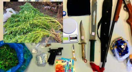 Λαρισαίοι αστυνομικοί έβαλαν χειροπέδες σε δύο… χασισοκαλλιεργητές στα Τρίκαλα (Φωτό)
