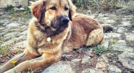 Αρπαγή σκύλου στον Βόλο κάνει τον γύρο του διαδικτύου [εικόνες]