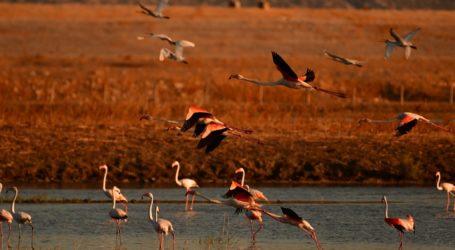 Έγκλημα στην Κάρλα – Κυνηγοί εξαφάνισαν σπάνια πτηνά