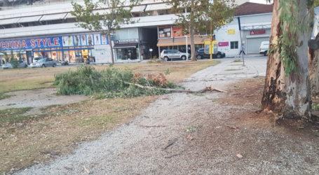 Έσπασαν κλαδιά στην πλατεία Ρήγα Φεραίου