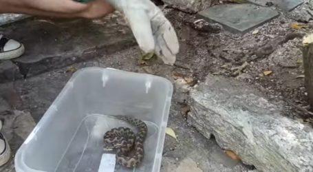 Οχιά με ισχυρό δηλητήριο τρύπωσε σε σπίτι στη Θεσσαλονίκη