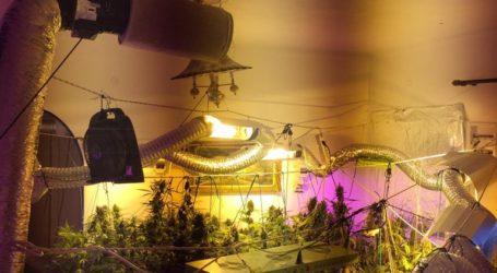 Εξαρθρώθηκε κύκλωμα που καλλιεργούσε δενδρύλλια κάνναβης και διακινούσε ναρκωτικά σε Αττική και Μύκονο
