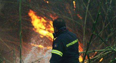 Οριοθετημένη η φωτιά στην περιοχή Ξερόκαμπος στη Μεσσηνία