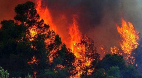 Ολονύχτια μάχη με τις φλόγες στη Σητεία