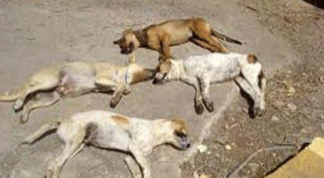 Μαζικές θανατώσεις ζώων από φόλες στα Διαβατά