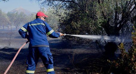 Σε εξέλιξη η πυρκαγιά που εκδηλώθηκε μεταξύ των οικισμών Μελίας και Νίψας
