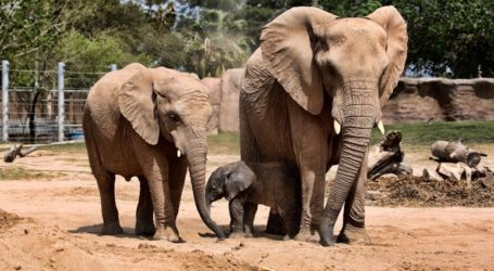 Λύθηκε το μυστήριο των θανάτων 330 ελεφάντων στη Μποτσουάνα