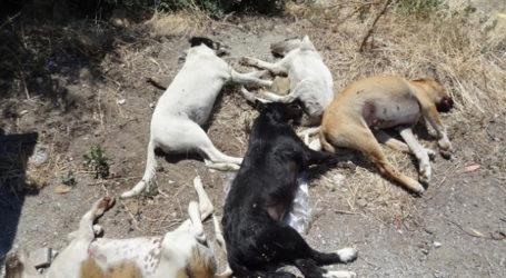 Φόλα σε έξι ιδιόκτητα σκυλιά στην Κρανιά – Φόλες σε Καλλιθέα και Ελασσόνα