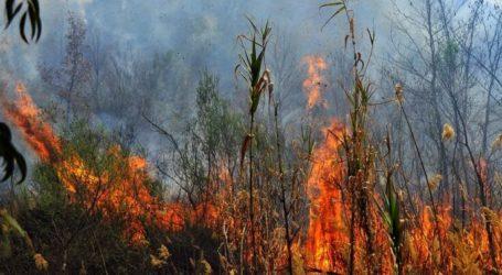 Φωτιά πίσω από το Praktiker στη Λάρισα
