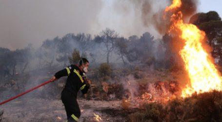 ΤΩΡΑ: Φωτιά σε δύσβατη περιοχή στη Ζαγορά Πηλίου