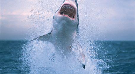 Βόλος: Οι δύο επιθέσεις λευκών καρχαριών στον Παγασητικό – Ποια ήταν τα θύματα