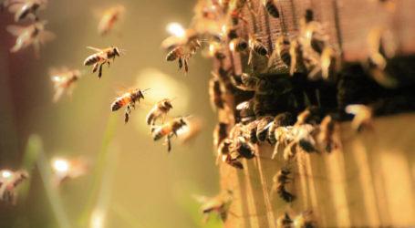 Πήλιο: Οι μέλισσες έδιωξαν τους πιστούς από την εκκλησία