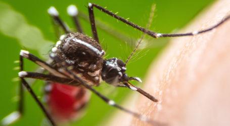 Κουνουποκτονίες σε Βόλο, Αλμυρό, Βελεστίνο και Σκιάθο