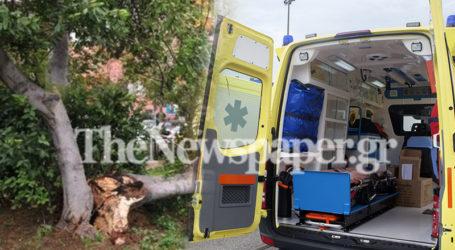 Βόλος: 45χρονος καταπλακώθηκε από κλαδί δέντρου και κατέληξε στο νοσοκομείο