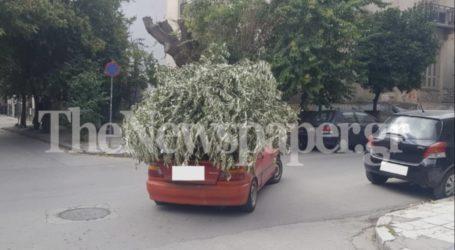 Αυτοκινούμενο δέντρο!