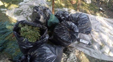 Στη «φάκα» οργάνωση που καλλιεργούσε χασίς – Δραστηριοποιούταν και στη Λάρισα (φωτο – βίντεο)
