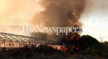 Βόλος: Φωτιά στο Διμήνι – Δείτε εικόνες