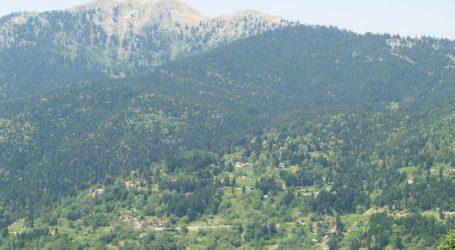 Τρίκαλα: Ταξίδι στους μοναδικούς βιοτόπους με τη σπάνια χλωρίδα και πανίδα
