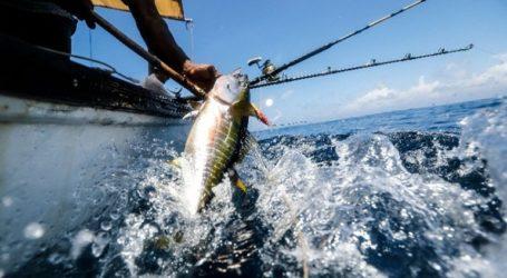 Ξεκινάη πιστοποίηση των αλιευμάτων στις ιχθυόσκαλες