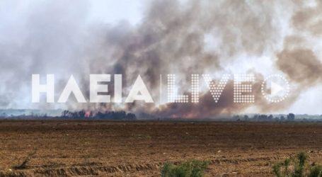 Σε εξέλιξη μεγάλη πυρκαγιά σε βάλτο στο Μπρινιά Μανωλάδας