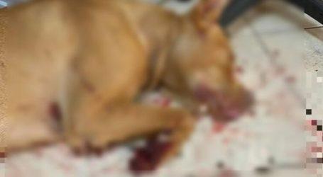 Σοκαριστική κακοποίηση σκύλου στα Χανιά