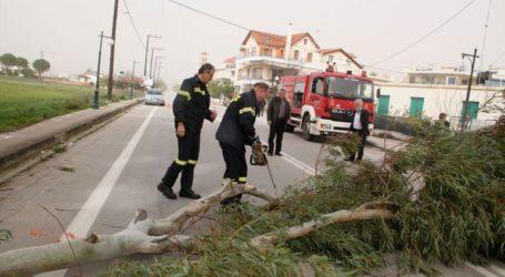Πτώσεις δέντρων λόγω ισχυρών ανέμων στη Θεσσαλονίκη